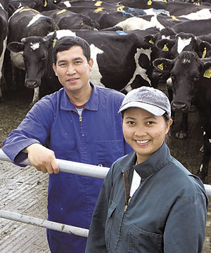 Filipino dairy workers