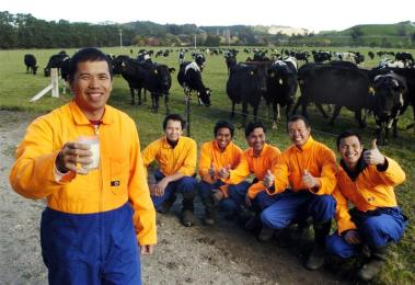 dairy workers in NZ